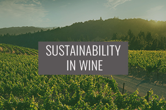 Sustainability in Wine