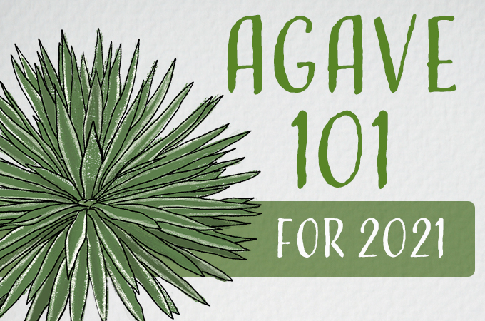 Agave 101 for 2021