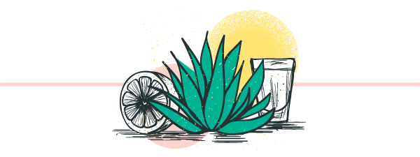 illustrated image of agave plant