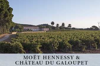 Moët Hennessy & Château du Galoupet (text) with vineyard photo